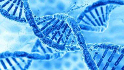 is snoring in your genes
