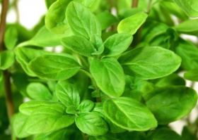 essential oils for snoring marjoram