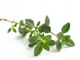 essential oils for snoring thyme